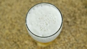 Mousse de bière de l'houblon brassé à une brasserie privée de métier dans la perspective d'un grain léger de malt dans la vue de  clips vidéos