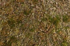 Mousse de germination de tapis Photo stock