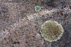 Mousse de lichen sur le fond de pierre de granit Photographie stock