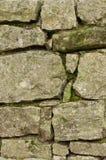 Mousse de mur en pierre Photos stock