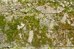 Mousse de mur en pierre Photographie stock libre de droits
