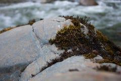 Mousse de roche de rivière Image libre de droits