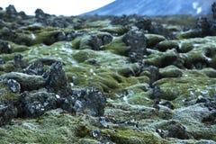 Mousse durable sur les roches volcaniques en Islande photo libre de droits