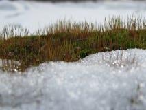 Mousse en hiver photo libre de droits