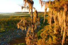 Mousse espagnole en Floride Images stock