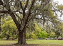 Mousse espagnole en parc de la Nouvelle-Orléans Photographie stock