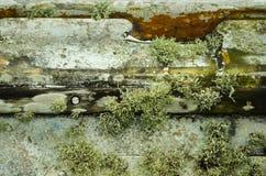 Mousse et algues grandissantes sur un bateau Images libres de droits