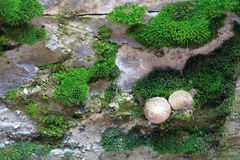 Mousse et champignon de couche photos stock