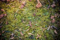 Mousse et feuilles sèches Photos stock