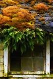 Mousse et fougères au-dessus de fenêtre, Washington State Images libres de droits