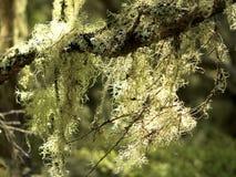 Mousse et lichen Photo libre de droits