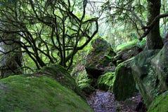 Mousse et lichen Photographie stock libre de droits