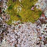 Mousse et lichen sur le vieux mur Photos libres de droits