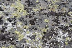 Mousse et lichens Photo stock