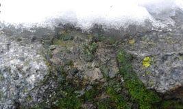 Mousse et neige sur un mur en pierre photos stock