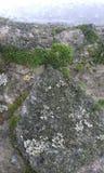 Mousse et neige sur un mur en pierre Photographie stock libre de droits