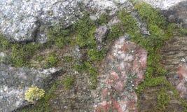 Mousse et neige sur un mur en pierre Image libre de droits