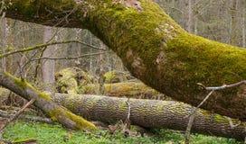 Mousse et pièces d'arbre enveloppées par lichen Image stock