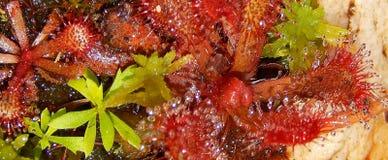 Mousse et plantes aquatiques sur la berge Images stock