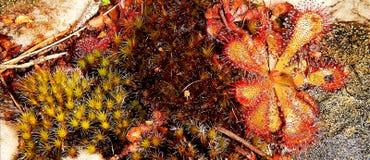 Mousse et plantes aquatiques sur la berge Photo stock