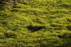 Mousse et tourbe dans la pelouse Photographie stock libre de droits