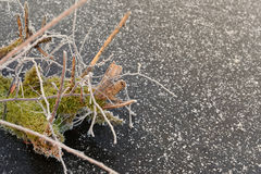 Mousse givrée avec la fin de filet d'araignée au-dessus de la glace neigeuse Photo stock