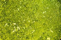 Mousse, herbe, fond Image libre de droits