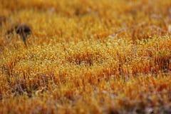 Mousse jaune étant baignée avec la lumière de coucher du soleil Photos stock
