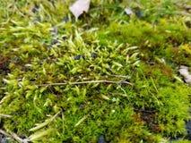 Mousse moulue Image stock