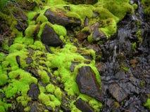Mousse naturelle verte humide fraîche Photographie stock libre de droits