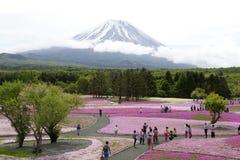 Mousse rose au Mt fuji Images libres de droits