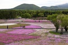 Mousse rose au Mt fuji Photo libre de droits