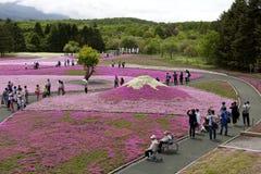 Mousse rose au Mt fuji Photo stock