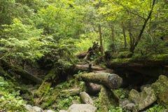 Mousse s'élevant dans le grand arbre tombé Tronc d'arbre avec de la mousse Photo stock
