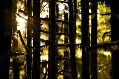 Mousse sur des arbres Photos libres de droits