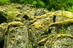 Mousse sur des roches Photos libres de droits