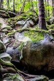 Mousse sur des roches et des arbres photographie stock