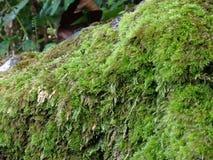 Mousse sur l'échelle en pierre Photo stock