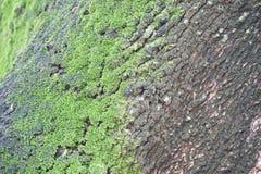 Mousse sur l'arbre Photo stock