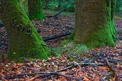 Mousse sur l'arbre Photographie stock libre de droits
