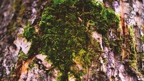 Mousse sur l'arbre image libre de droits