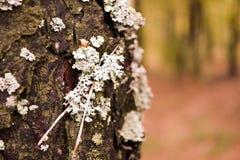Mousse sur l'arbre dans la forêt Photographie stock