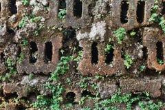 Mousse sur la brique Photos stock