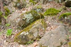 Mousse sur la pierre en automne Photos libres de droits