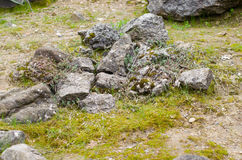 Mousse sur la pierre en automne Photos stock
