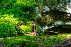 Mousse sur la pierre et le sol image libre de droits