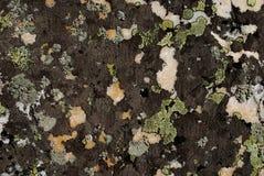 Mousse sur la roche Photo libre de droits