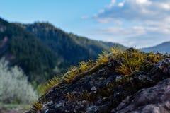 Mousse sur la roche contre le ciel bleu Photographie stock libre de droits