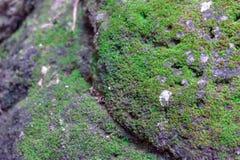 Mousse sur la roche dans la forêt images stock