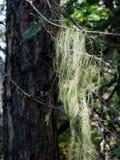 Mousse sur le bois Photographie stock libre de droits